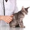 Ветеринарные клиники в Александрове